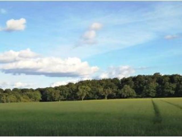 Jones Hill Wood near Wendover
