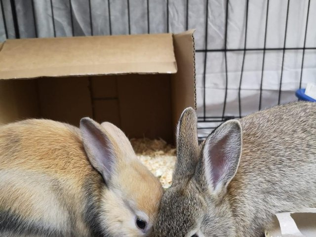 The two rabbits now safe at Blackberry Farm in Aylesbury